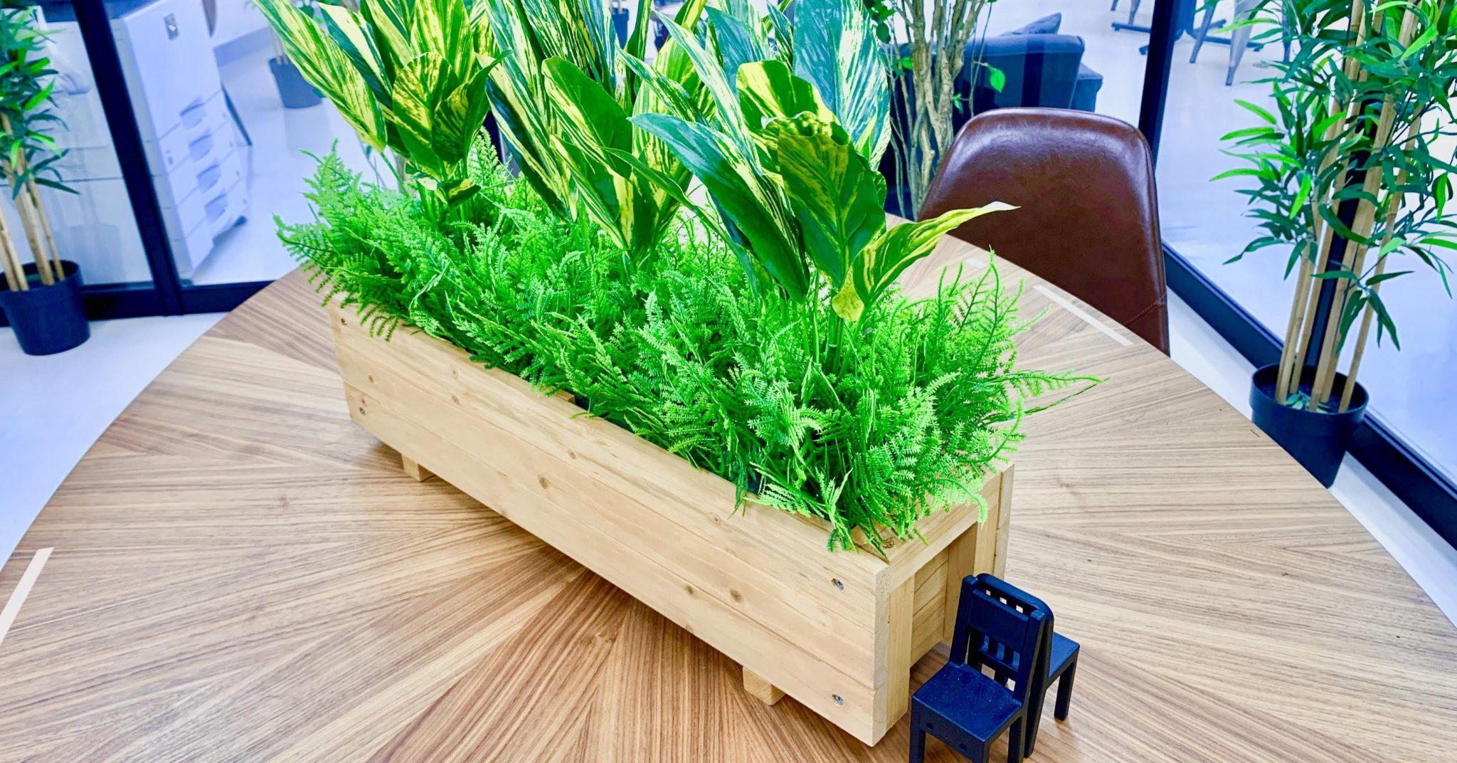 仕切り用植物